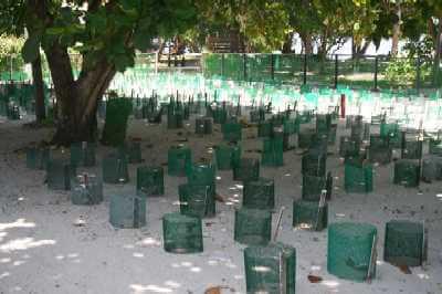 Turtle Island Hatchery
