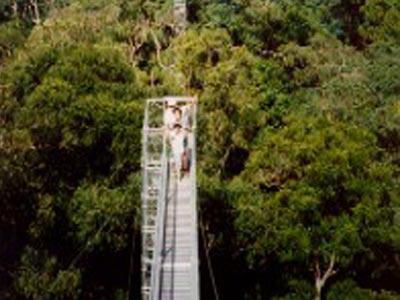 Canopy Walkway at Temburong