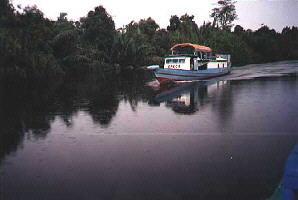 A Klotok on the River to Rimba Lodge