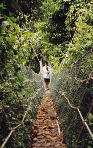 Batang Ai Canopy Walkway
