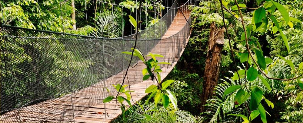 Bunga Raya Island Resort & Spa - Canopy Walk