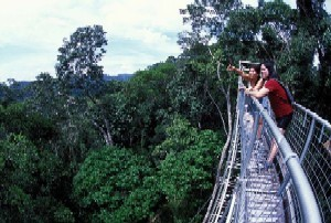 Canopy Walkway in Ulu Temburong National Park, Brunei
