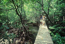 Gaya Island Mangrove Boardwalk