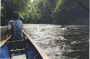 Guiding the Longboat through the rapids