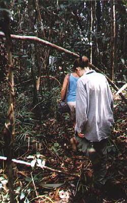 In the Jungle near Camp Leakey