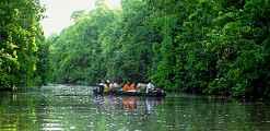Jungle river cruise near Sukau