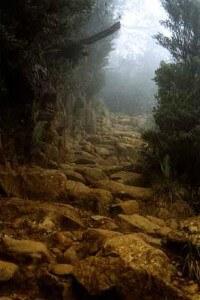 Montane Forest Climb