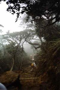 Walking track up Mt Kinabalu