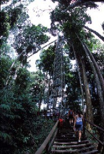 Accessing the Canopy Walkway