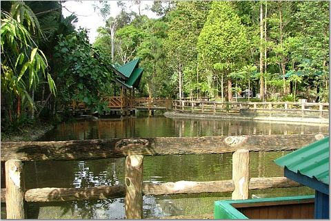 Lagoon in Sungai Liang Forest Park