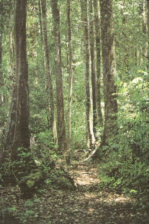 Walking trail in Peradayan Reserve