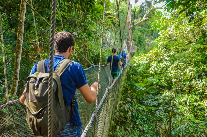 Rainforest Canopy Walkway at Poring Hot Springs seen on Mount Kinabalu and Poring tour
