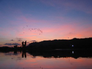 Egrets arriving at Sunset on the Safari